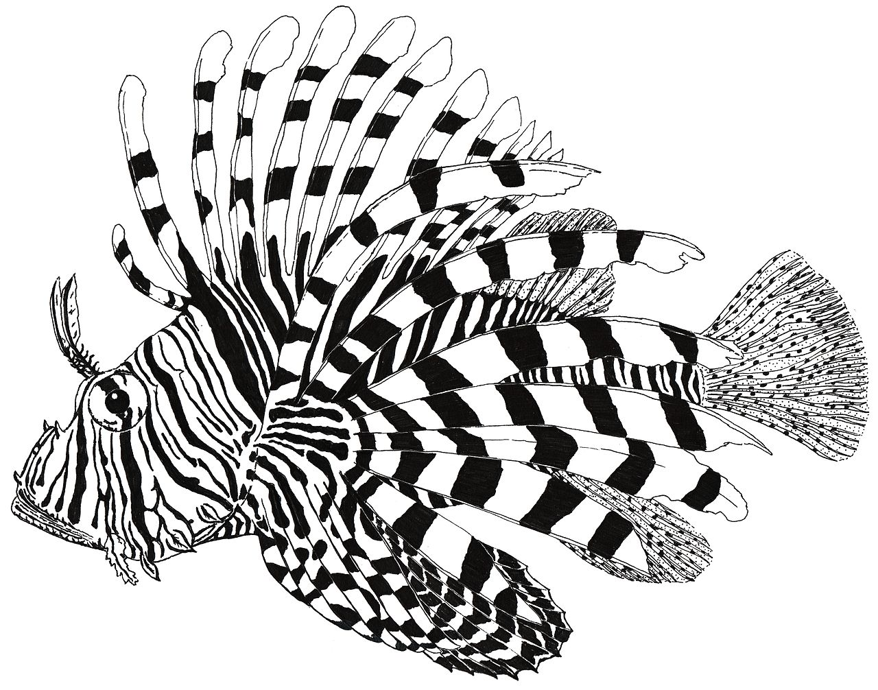 lionfish drawing cat silhouette clip art free cat silhouette clip art svg