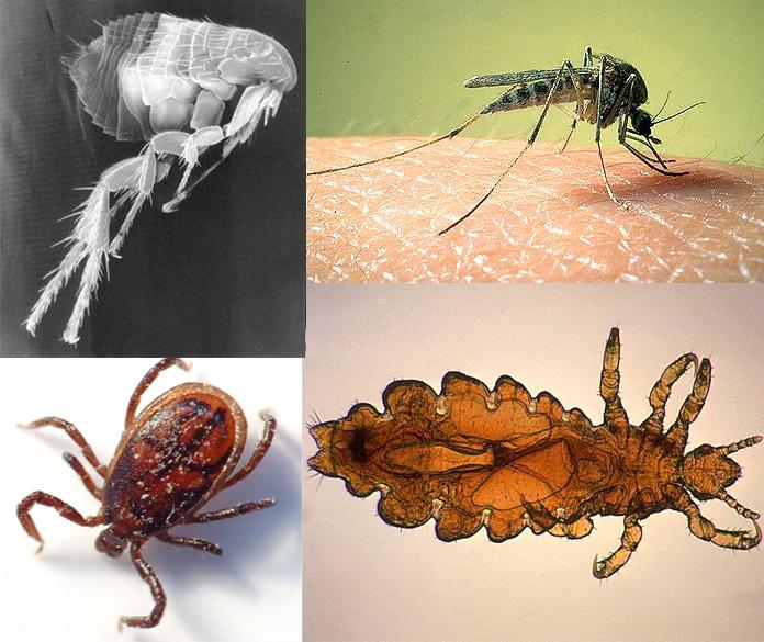 Картинки животные паразиты
